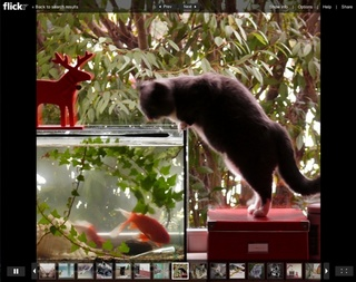 slideshow cat