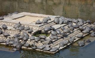 四天王寺 亀の池 現代